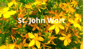 St. John Wort
